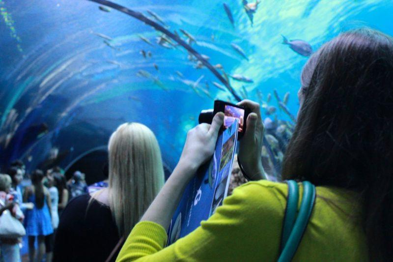 tunnel at the Georgia Aquarium
